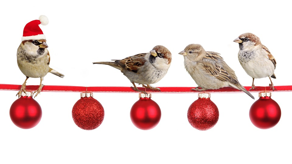 sparrows 2900850 960 720 - Let Your Clients Know How Valued They Are Over The Christmas Period!